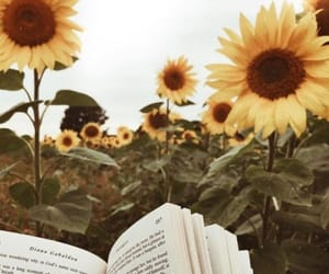 book, sunflower, and flowers image