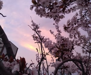 flower, sky, and pink image