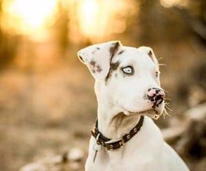 animal, friend, and dog image