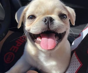 happy, mops, and puppy image