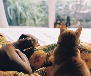 cat, dog, and vintage image