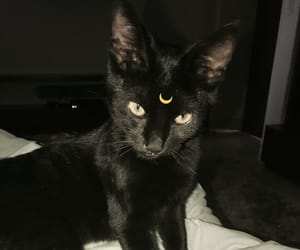 baby cat, black cat, and black cats image