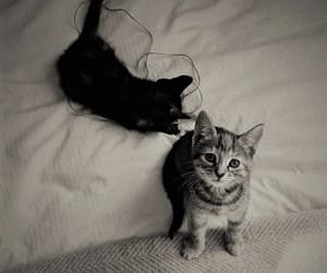 animals, kitten, and black and white image