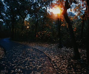 aesthetic, leaves, and September image