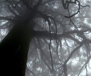 tree, dark, and fog image