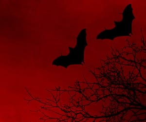 bats, purple, and dark image
