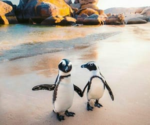 penguin, aesthetic, and beach image