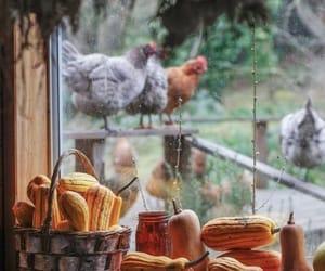 eggs and farm image