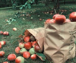 apple, apples, and autumn image