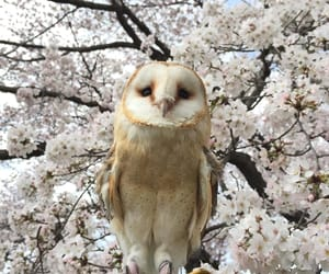 animals, owl, and sweet image