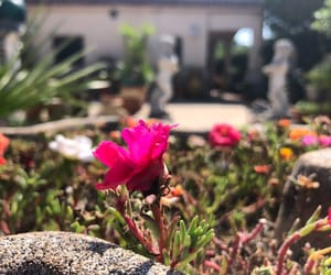 fiori, plants, and vaso image