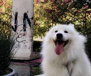 babe, collar, and dog image