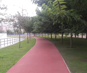 green, nature, and sport image