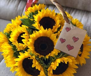 amor, flores, and regalo image