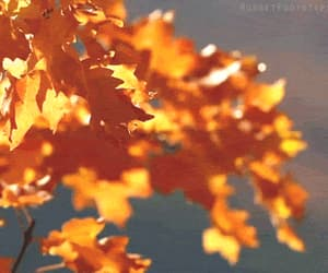 animated, autumn, and gifs image