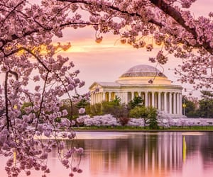cherry blossom, photography, and tourism image