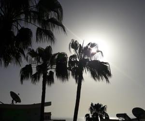 fuerteventura, Island, and palms image