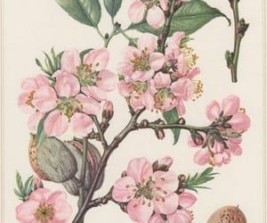 botanical, fresh, and art image