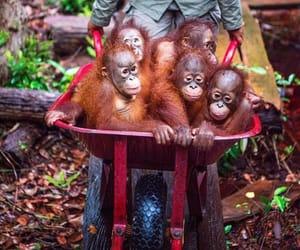 Animales, naturaleza, and orangutanes image