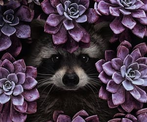 animal, flowers, and purple image