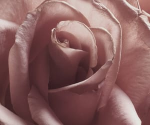 aesthetic, inspiration, and rose image