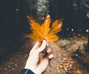 alternative, autumn, and crisp image