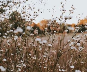 flowers, field, and aesthetic image