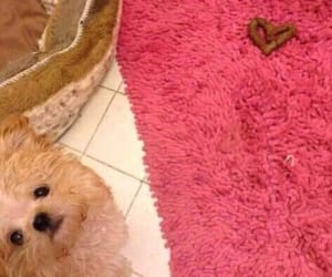 dog, happiness, and hearts image