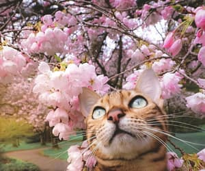 beautiful, cat, and flores image