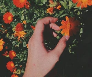 aesthetic, bloom, and flowers image
