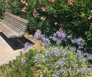 bush, flowers, and lavender image