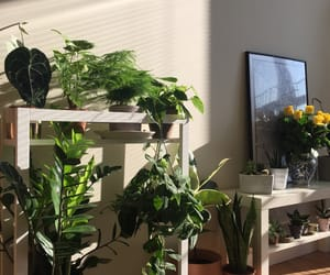 jungle, room, and tropical image