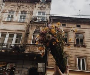 flowers, aesthetic, and city image