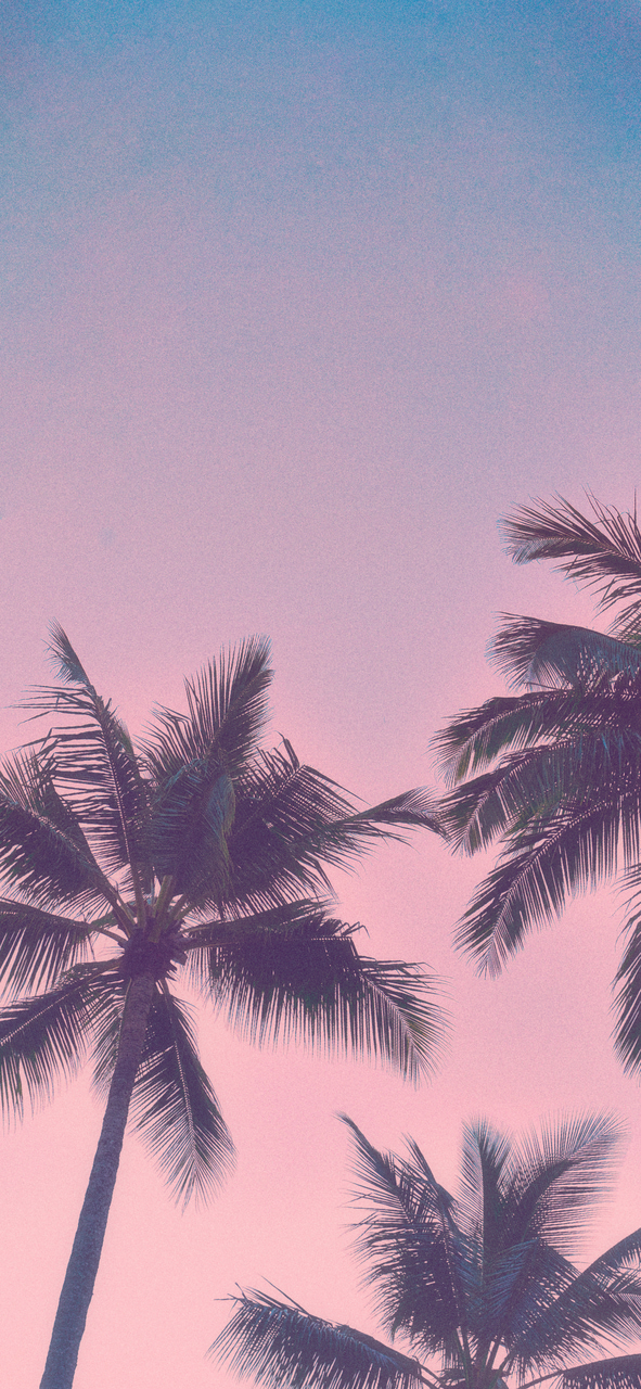Iphone X Wallpaper Shared By Doldoli On We Heart It