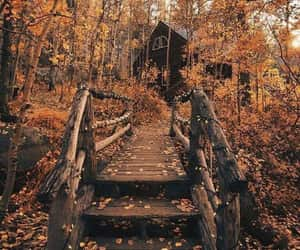 article, lifestyle, and autumn image