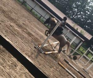 Cavalli, cavallo, and horse image