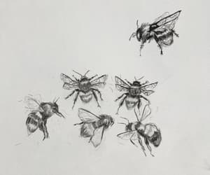 bee, draw, and mermaidels image
