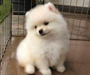 adorable, cute, and dog image