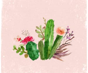 beautiful, cactus, and flowers image