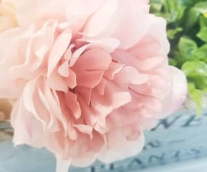 flower, pink, and greenery image