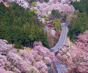 cherry blossoms, flowers, and japan image