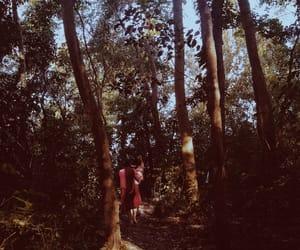 arvores, nature, and natureza image