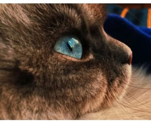 animals, blue, and cat image