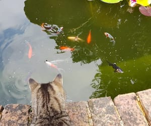 cats, fish, and nature image