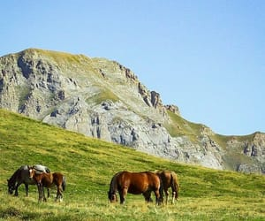 Animales, equinos, and caballos image
