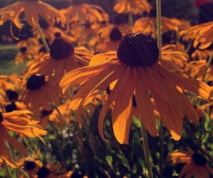 beautiful, flower, and sommer image
