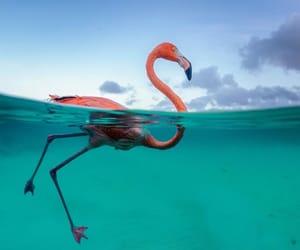 aesthetic, animals, and flamingos image