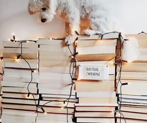 animal, book, and dog image