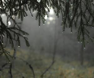 forest, nature, and rain image