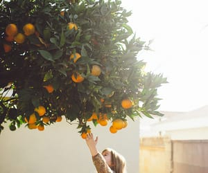 orange, tree, and nature image